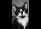 Simon is a adoable  black and white kitten looking for a furever family. Neutered and up to date on vaccines.  Call 1-989-894-0174.
