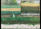 A STUDIO 23 PAINTING re-created from a photo (inset) taken by Rotarian Michael Stoner, of a White Egret at Bay County Pinconning Park.          --Courtesy Photo